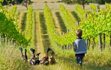 Organic Wine in Australia – All you have to know