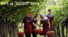 VINO Amato's Italian Wine Fair 2019