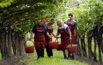 Mezzacorona: Pioneers In Sustainability