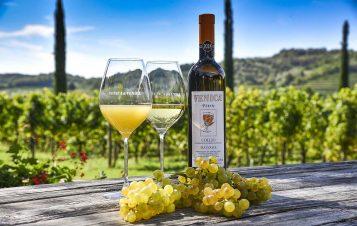Venica & Venica: 90 Years of Passion Making Premium Wines